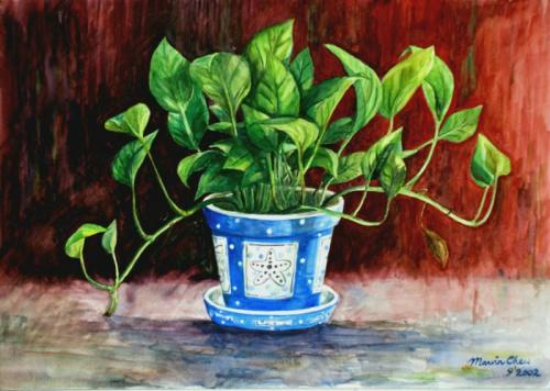 plantsmall.jpg